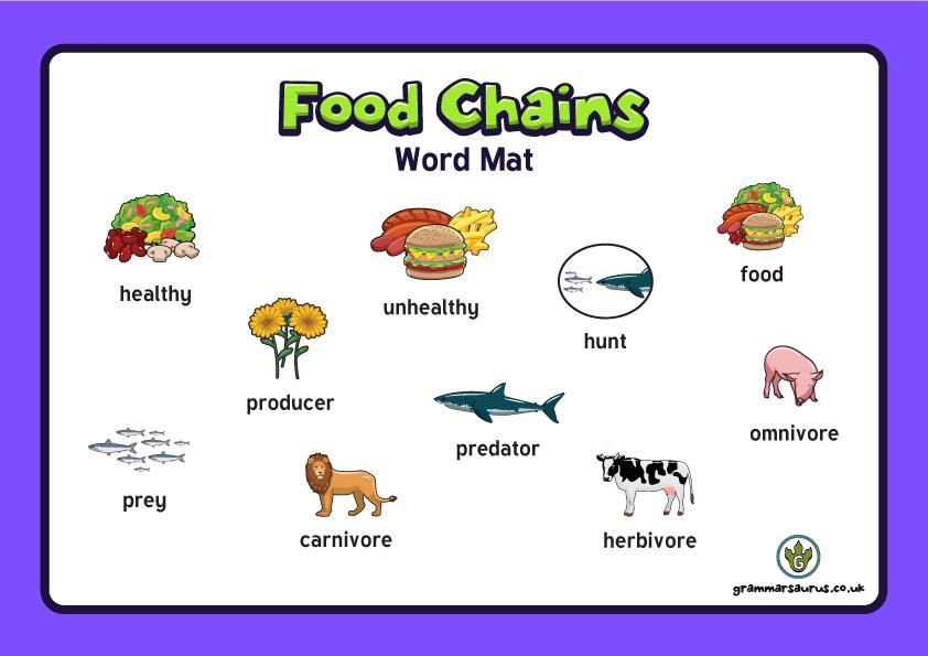 rainforest food chains display banner food chains display