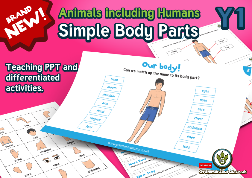 Year 1 Science Animals Including Humans Basic Parts Of Human